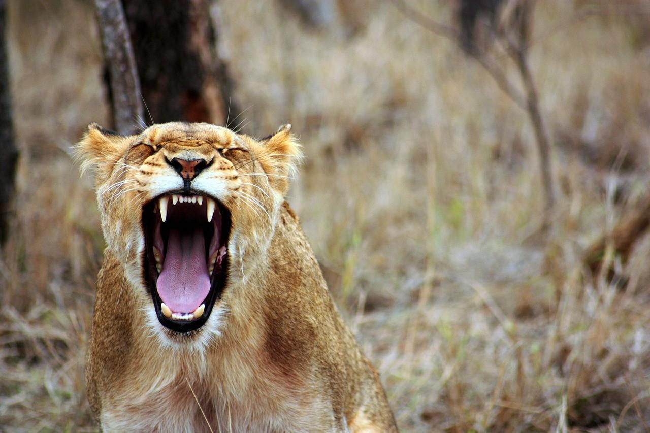 Exprimer la colère peut compromettre la réussite d'un objectif