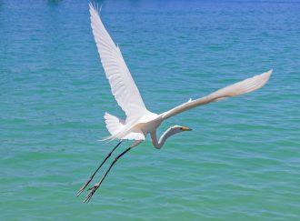 les valeurs motrices donnent des ailes: elles renforcent la motivation et fluidifient l'action