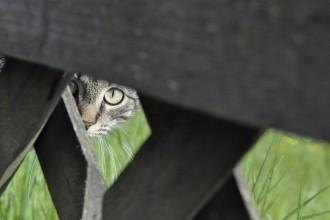 La curiosité est une sacrée qualité à débrider