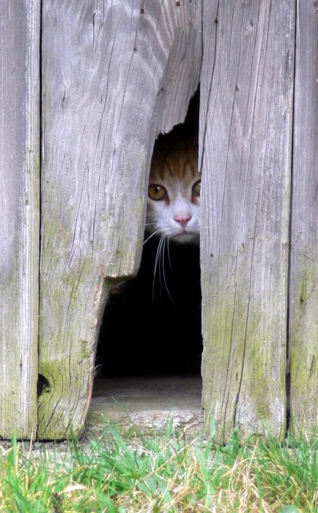 La curiosité est une soif d'apprendre qui a de très nombreux bénéfices