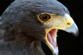 comprendre le rôle de la colère, parfois salutaire, parfois signe d''un besoin d'affirmation de soi