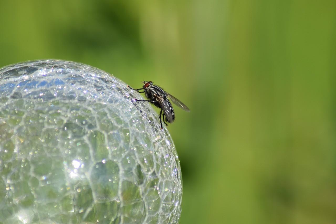 La lecture de pensée, sport hybride entre mouche du coche et boule de cristal!