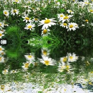 La réconciliation à soi permet à nos projets de mieux fleurir