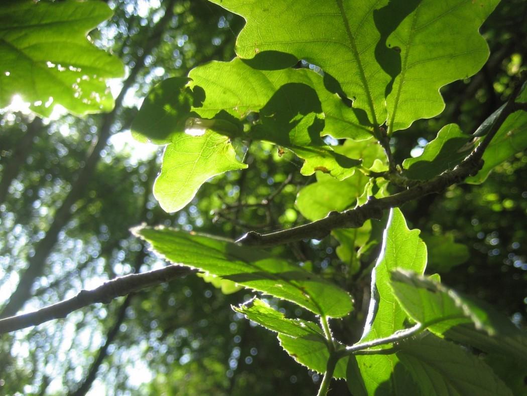 Le bain de forêt, sous forme de balade tranquille, a bien de vertus pour l'humeur, la santé et la créativité