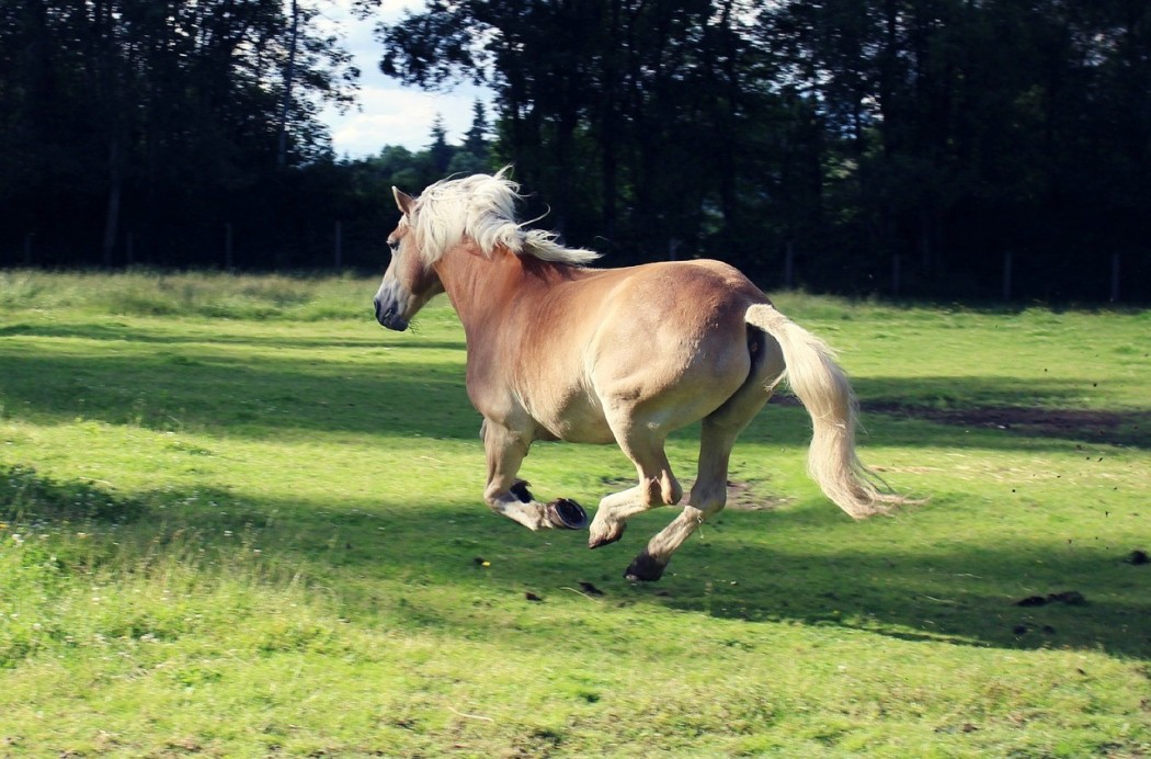 quand on modifie un comportement, le naturel revient-il au galop?