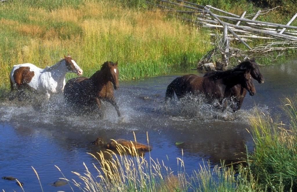 Modifier un comportement: c'est en amenant 50 fois le cheval à la rivière qu'on lui fera traverser le gué