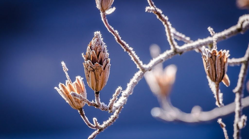 coaching-4-saisons-hiver
