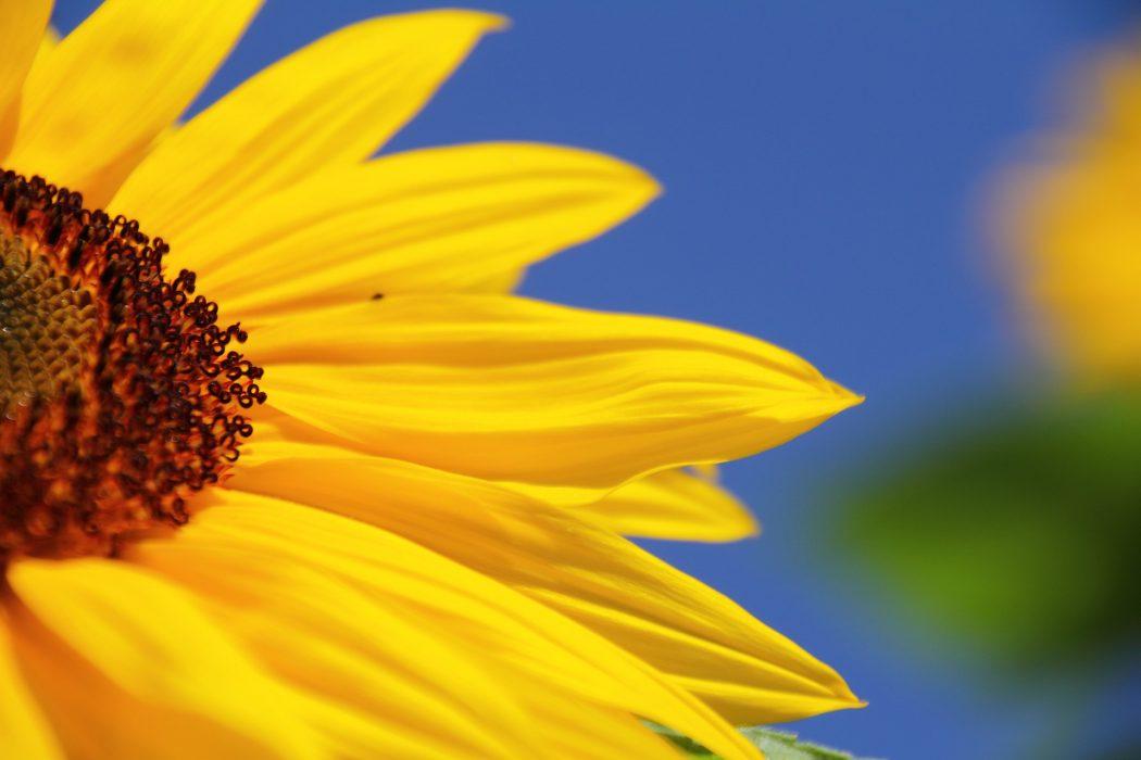 Vivre et travailler au rythme des saisons: l'été, temps des bilans et de la réflexion
