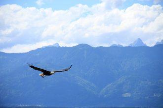 C'est quand l'aigle se tait qu'il trouve sa vraie nature et peut prendre son envol