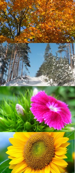 Adapter son rythme réflexion/action et vitamines mentales à celui des  saisons