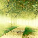 Comment réussir une reconversion passion: exploration et job crafting