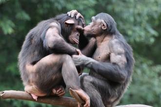 Comme les primates, notre nature est d'être empathiques et solidaires