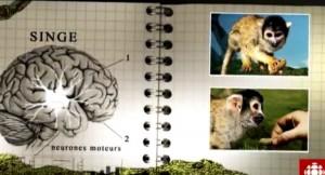 les neurones miroirs permettent des compétences relationnelles telles que l'empathie