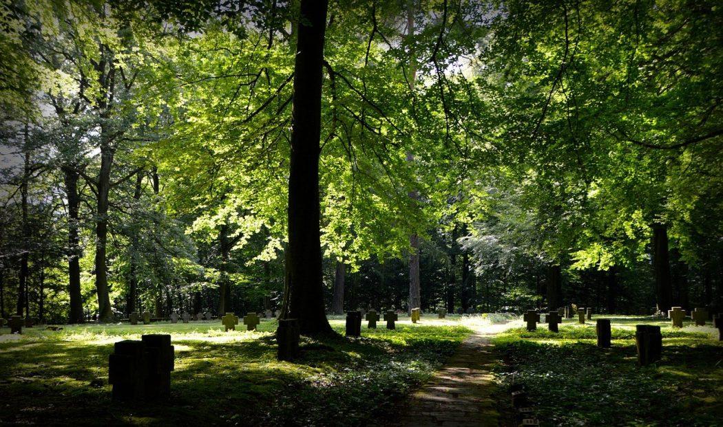 nos regrets n'en finissent pas de mourir dans les cimetières à rêves