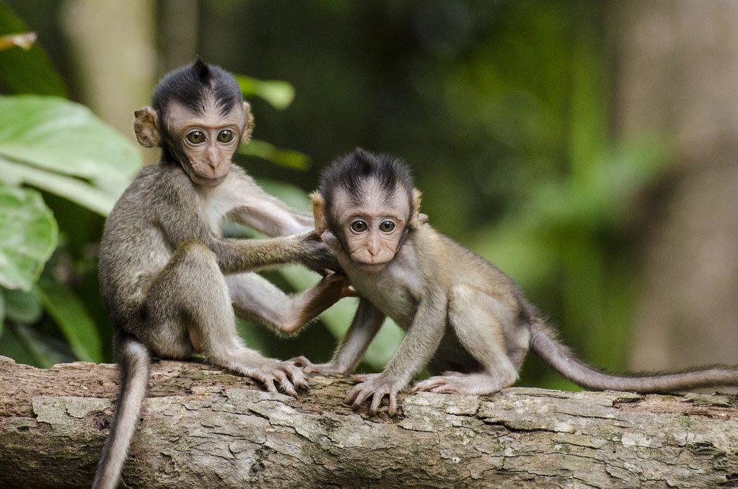 Préserver les neurones miroirs pour renforcer l'empahtie et les relations agréables