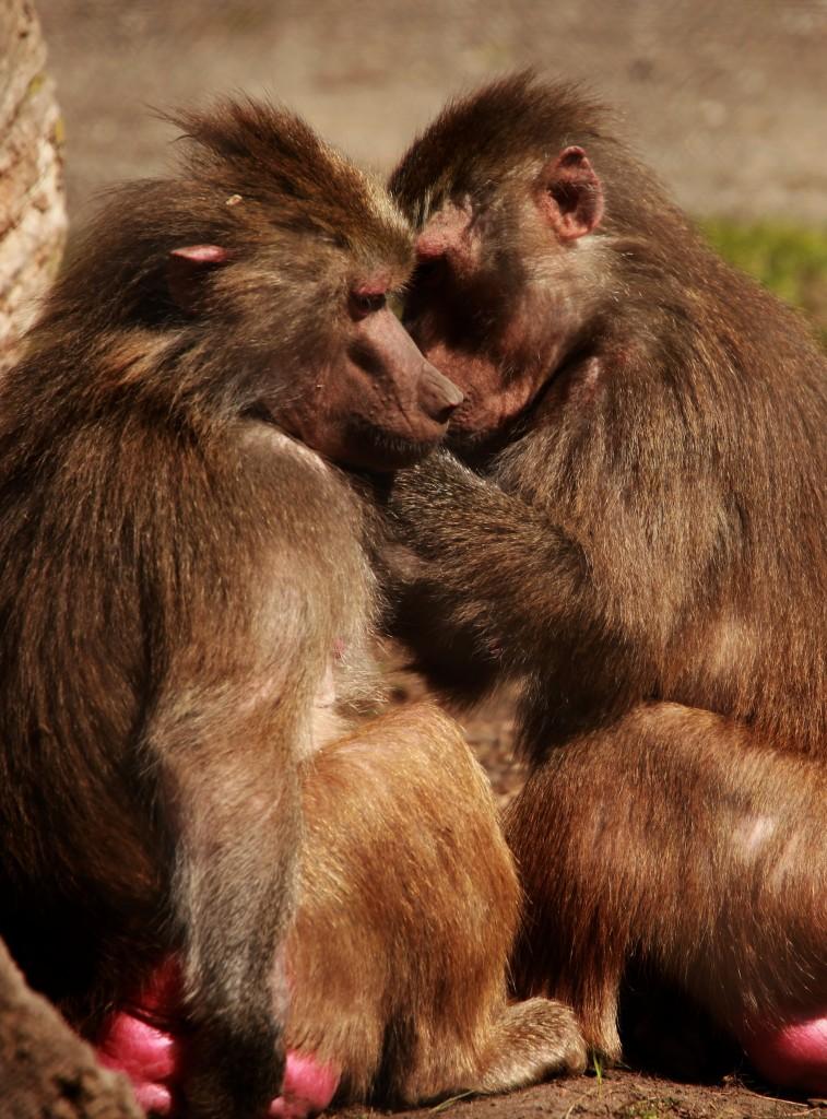 La perte d'empathie peut avoir un impact négatif sur nos relations. voici comment 'éviter.
