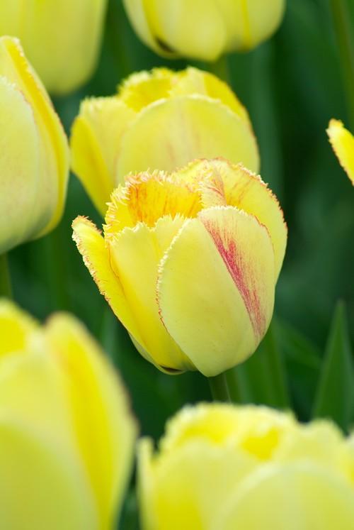 S'envoyer des fleurs plutôt que des scuds