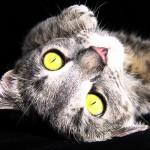 métaphore: appelons un chat un chat... tant qu'il s'agit du même chat
