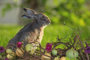 chercher ses désirs et projets comme une chasse aux oeufs de pâques