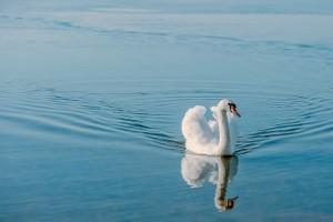 Cesser de se dévaloriser et construire un regard bienveillant