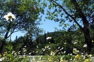 fleuve paisible rives fleuries