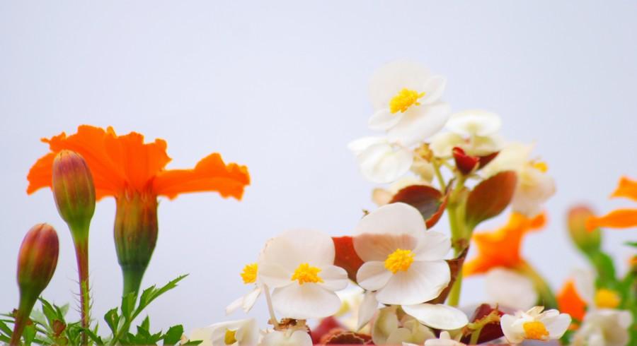 L'émerveillement est un état d'esprit: 10 façons de le cultiver