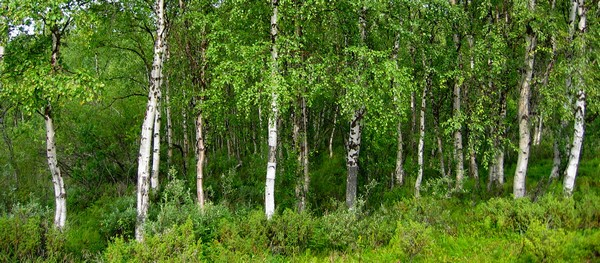S'éloigner de son arbre pour voir la forêt