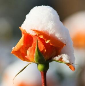Reconversion professionnelle: printemps du plaisir au travail, hiver financier?