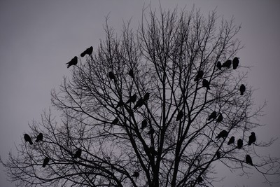 reconversion oiseaux de mauvais augure