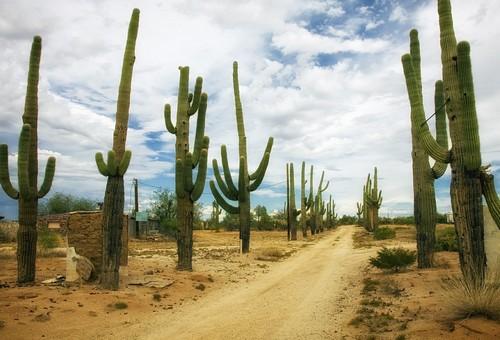 les cactus du réalisme empêchent les chemins sinueux de la recovnersion