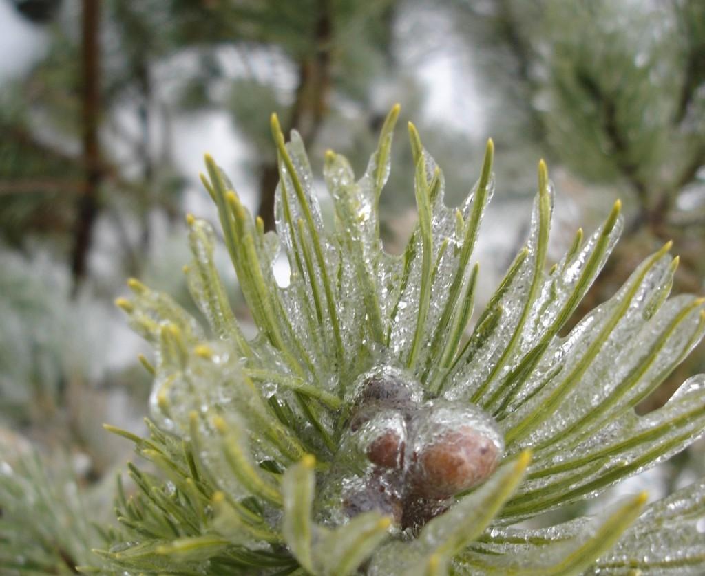 le contact avec la nature au fil des saisons favorise la créativité