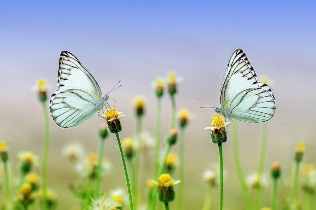 triplette poétique de soi: estime de soi, l'essentiel et la relation à l'autre