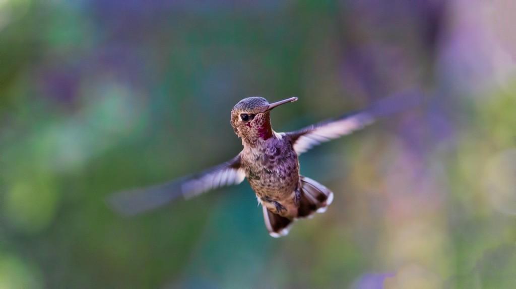 L'impatience peut donner des ailes