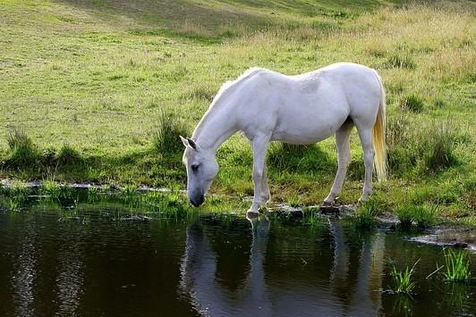 cheval rivière