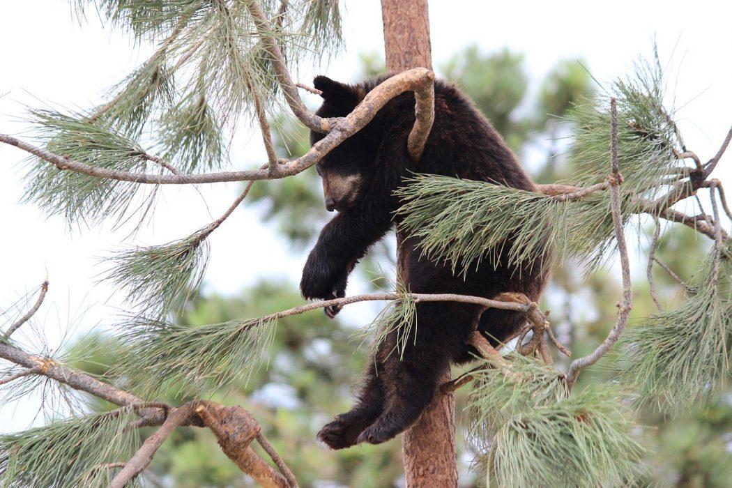 le déni d'oursitude peut générer frustration, anxiété ou lassitude