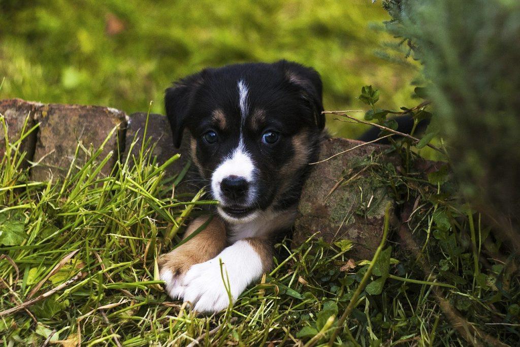 Choisir un intermédiaire pour entrer en covnversation avec un inconnu: le chien, intermédiaire idéal: