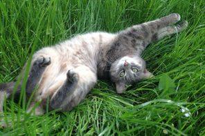 5 manière de faire des micro pauses éjouissantes pour se détendre et se ressourcer en 2 mn