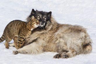 bienveillance, entraide coopération comportements naturels