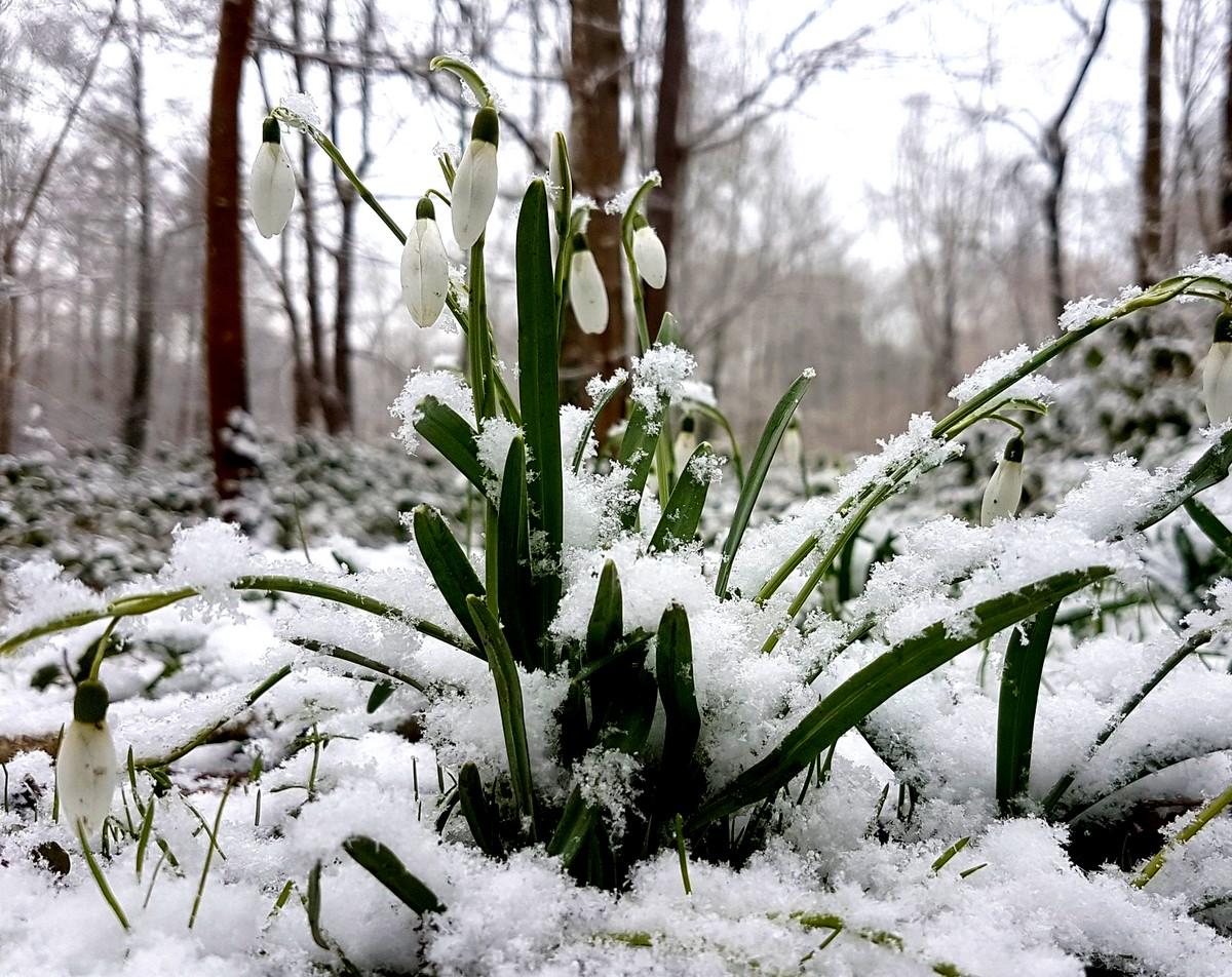 Redécouvrons le perce-neige tapi au fond de nous: les qualités et ressources qui l'aident à émerger du froid et de la terre gelée