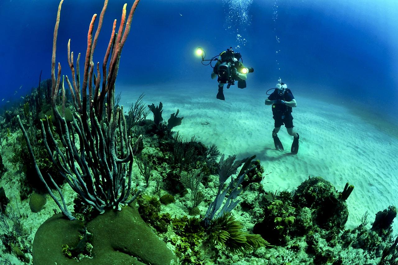 Les applis emploi ont poussé comme les algues en Meditarranée: comment s'y retrouver?