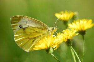 Créer une oasis de biodiversité émotionnelle pour gagner en plaisir de travailler